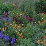 Gartenimpressionen - Bild eines Bauerngarten