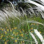 Gartenimpressionen - Bild von Gräsern im Sonne und Wind
