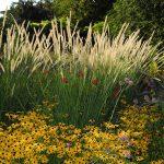 Gartenimpressionen - Bild eines Herbstgartens