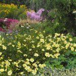 Gartenimpressionen - Bild einer Prachtstaudenrabatte im Herbst