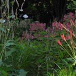 Gartenimpressionen - Bild eines Schattengarten