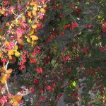 Gartenimpressionen - Guter Heckenschnitt